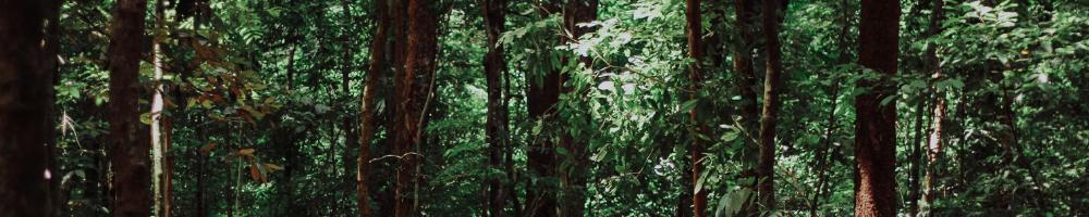 Woods Zombie Apocalypse